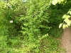 Kletterweg 2011 na 47 min: verborgen bordje; de route gaat rechts omhoog