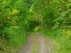 wandeling Bernkastel - nieuw pad (mei 2015)
