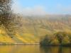Weinbergen in de mist (nov 2015)