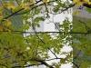 Binger Mäuseturm - door de bladeren heen (okt 2017)
