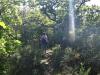 Monreal Burgenwandeling - zonnige bospad (mei 2018)