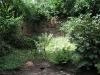 de wildernis links (2007)