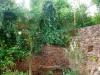 jungle ruïne (aug 2016)