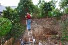 klimop linker muur verwijderen (okt 2018)