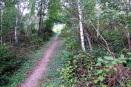Nieuwe pad wandeling - bospaadje (aug 2020)