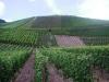 Vakantie - werk in wijnvelden (juli 2006)