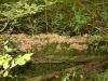 Eltz Karden na 29 min - paddestoelenboom (okt 2012)