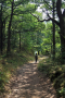 wandeling Traben - weer het bos in (juli 2018)