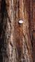 wandeling Traben - Sequoia (juli 2018)