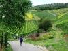 Weinlehrpfad - Patronen wijnvelden (aug 2011)