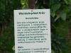 Weinlehrpfad - Infobord van de bekende Dornfelder (aug 2011)