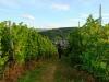 Boswandeling Kröv - wijnvelden (okt 2013)