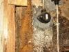 Vermolmde linker deurpost kelderdeur (juli 2011)