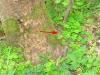 wandeling Bernkastel - hazelworm (mei 2015)