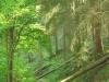 Leiermannspfad - boompje over het pad (mei 2015)