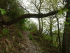 Pad Wolfer Berg-Kloster – steil met hindernissen (april 2012)