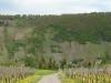 Pad Wolfer Berg-Kloster – bijna terug (april 2012)