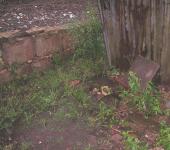 drassige grond (juli 2009)