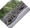 Het dak van de Scheune (2008)