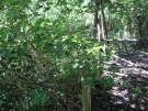 boventuin of wildernis? (2007)
