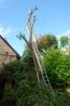 Kleiner wordende boom (mei 2012)