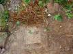 tuinkelderluik zichtbaar (aug 2016)