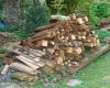 groeiende brandhoutstapel (sep 2016)