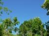 zomaar een foto omdat de lucht zo blauw was (mei 2012)