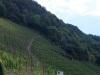Rondwandeling - horizontale wijnberg (aug 2020)