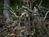 Wandeling Rheinstein 1 - sprookjesboom (okt 2017)