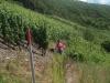 Wandeling - scheef paadje (juli 2006)
