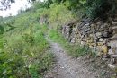 Nieuwe pad wandeling - kleiner pad (aug 2020)
