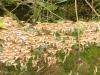 Eltz Karden na 29 min - paddestoelen detail (okt 2012)