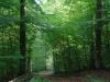 Karden Eltz na 1 u 10 min. - bospad (okt 2012)