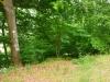 wandeling - vaag pad (juni 2014)