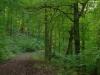 Marienburg Arras na 47 min - nog steeds bos (okt 2012)