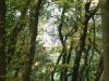 Marienburg Arras na 1 uur 7 min - Arras tussen de bomen (okt 2012)