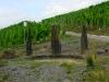 Wandeling Trarbach - Bernkastel - mini Stonehenge (sept 2013)