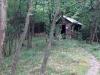 Wandeling Wolf - schuilhut in het bos (juni 2017)