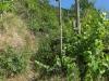 Wandeling Wolf - wijnstruikenpad (juni 2017)