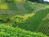 Weinlehrpfad - Uitzicht over de wijnvelden (aug 2011)