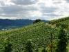 Weinlehrpfad - Uitzicht over wijnvelden (aug 2011)