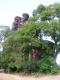 Wolfer Berg-Kloster - verstopt achter een boom (juli 2006)